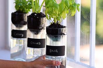 Cultiver des plantes dans des bouteilles en verre