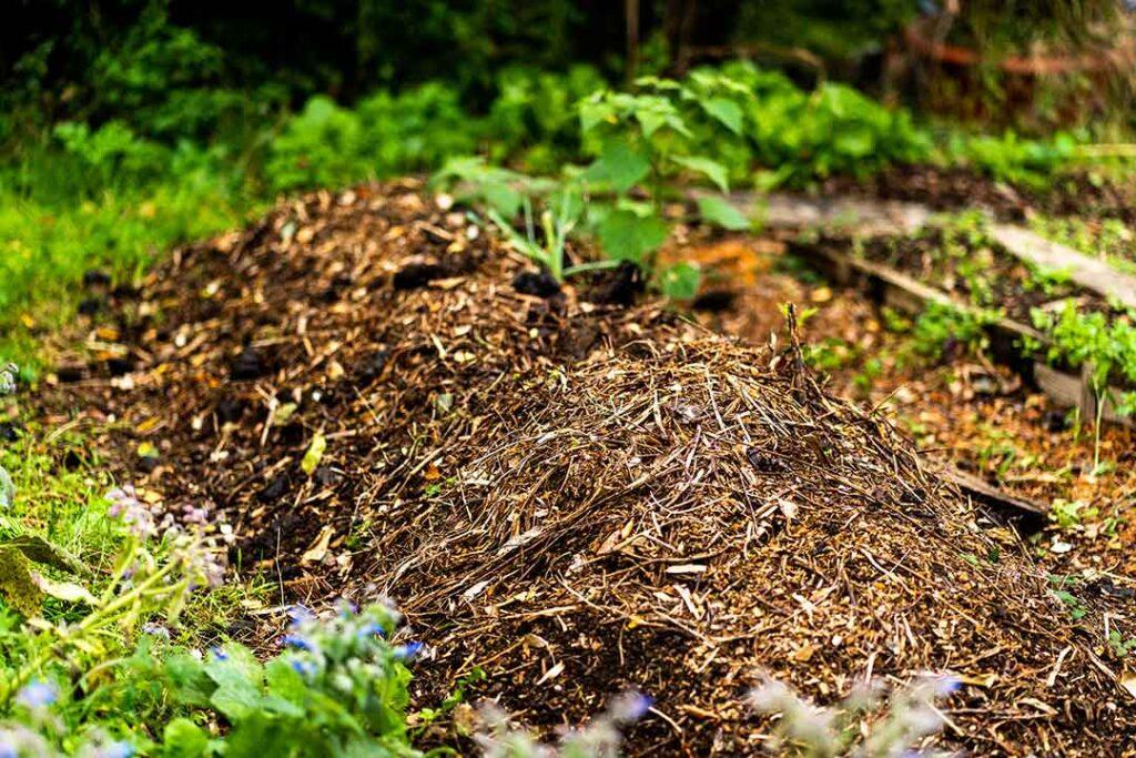Compost déchets verts jardin