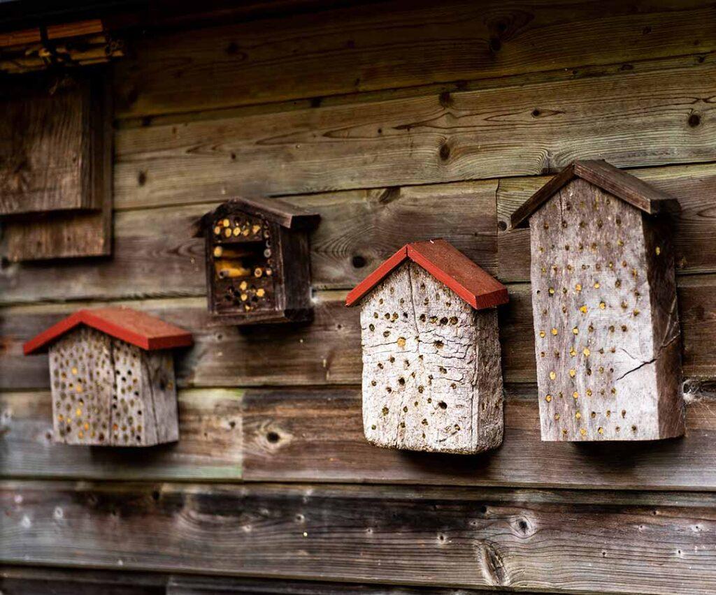 Hôtel insecte jardin