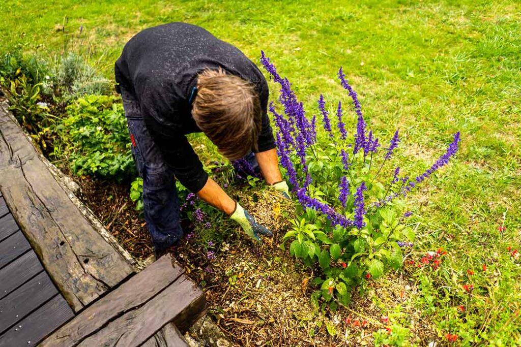Jardin paillage broyage